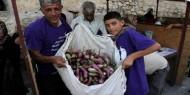 افتتاح مهرجان الباذنجان البتيري في بيت لحم