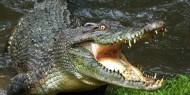 بالفيديو   تمساح يتسبب في شلل مرورى بولاية أمريكية