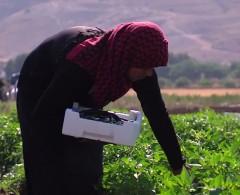 سلة غذاء الفلسطينيين.. مطامع إسرائيلية ترتسم حول الأغوار
