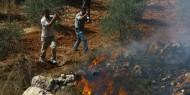 """مستوطنو """"يتسهار"""" يحرقون الحقول ويعتدون على قاطفي الزيتون"""