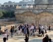 103 مستوطنين يقتحمون الأقصى تحت حراسة شرطة الاحتلال