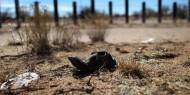 المكسيك: العثور على 166 جثة على الأقل في مقبرة جماعية