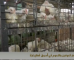 خاص بالفيديو|| أسعار الدواجن واللحوم في أسواق غزة