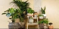 نصائح في الديكور قبل شراء نباتات الظل