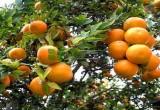جليل حيدر يكتب.. نارنج