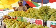 خاص بالفيديو والصور   معرض الشيخ عجلين.. مقصد الغزيين لشراء فاكهة الصيف