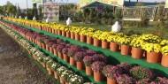 مشاتل الزهور وأشجار الزينة .. باب للجمال والطاقة الإيجابية